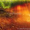 Rays of rising sun