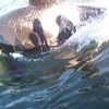 Orca whale off the San Juan Islands in Washington State. One of those is my shadow!
