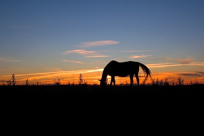 Summer sunset in Springbank, on the west edge of Calgary.