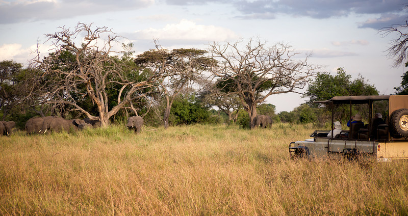 We're in our Land Rover, watching another Land Rover watching a herd of Elephant. This was on the Serengeti.