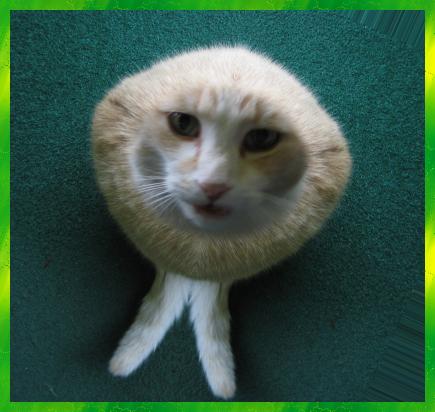 Cat (processed)