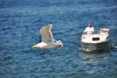 Seagull #3