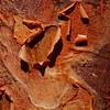 Paperleaf maple