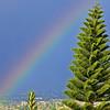 Ca-Rainbow-2