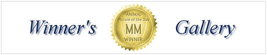 http://visionshots.smugmug.com/Other/mmapotd/i-8G3fxc7/0/XL/winnersgallery-XL.jpg