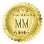 http://visionshots.smugmug.com/Other/mmapotd/i-wjNNj6W/0/Th/mmapotdmedallion175-Th.png
