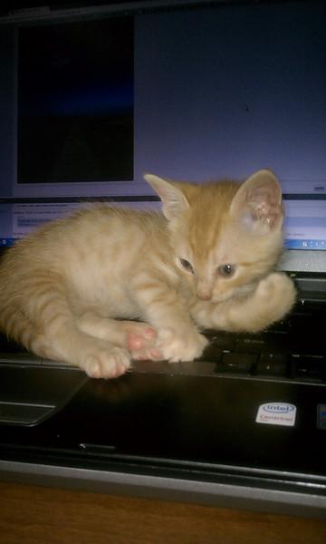 Dexter surfing the internet