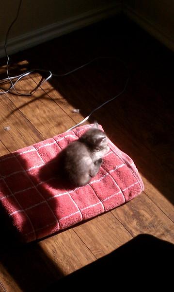 Storm sunbathing