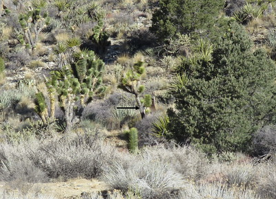 Mojave National Preserve and Mitchell Caverns