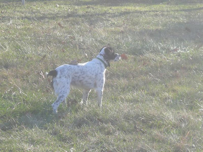 Molly December 2009
