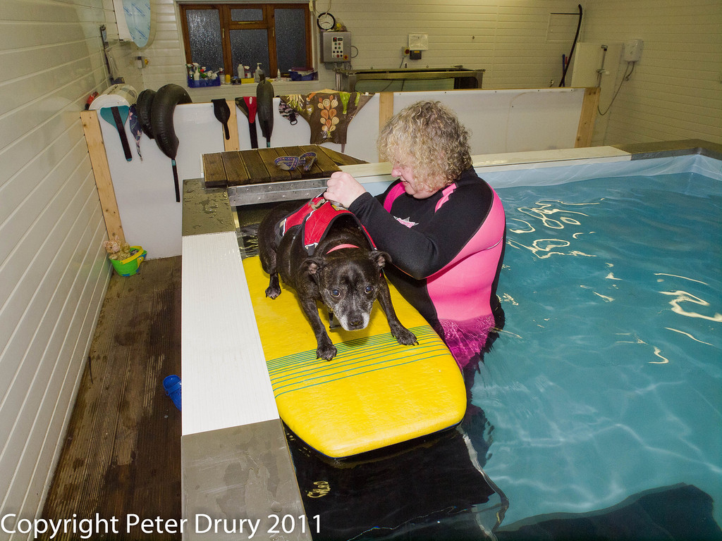3 January 2011. Molly's 3rd session.  Copyright Peter Drury 2011<br /> She knows she should stand but laying down on the board is so much easier......