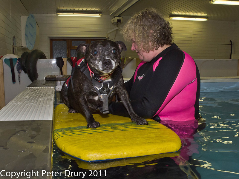 3 January 2011. Molly's 3rd session.  Copyright Peter Drury 2011<br /> Well, if I cannot lie down I can at least sit - can't I?