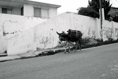 Oaxaca Mexico 2008