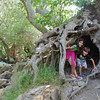 Coolest root fort!