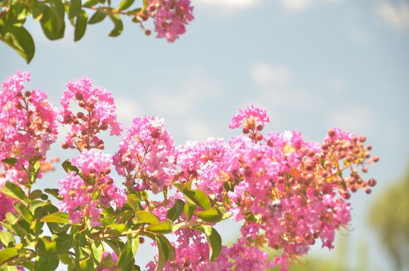 Photos from Mom's flower garden