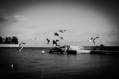 Flying birds over water, Monaco, French Riviera, Côte d'azur