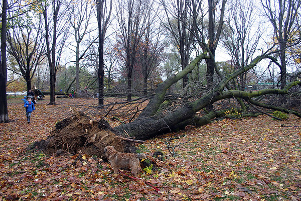 Monarch Park Hurricane Sandy