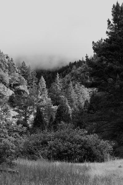 Bluff Creek 2012-06 014 CA-USA_nik-BW