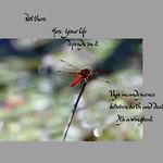 Dragonfly Dharma