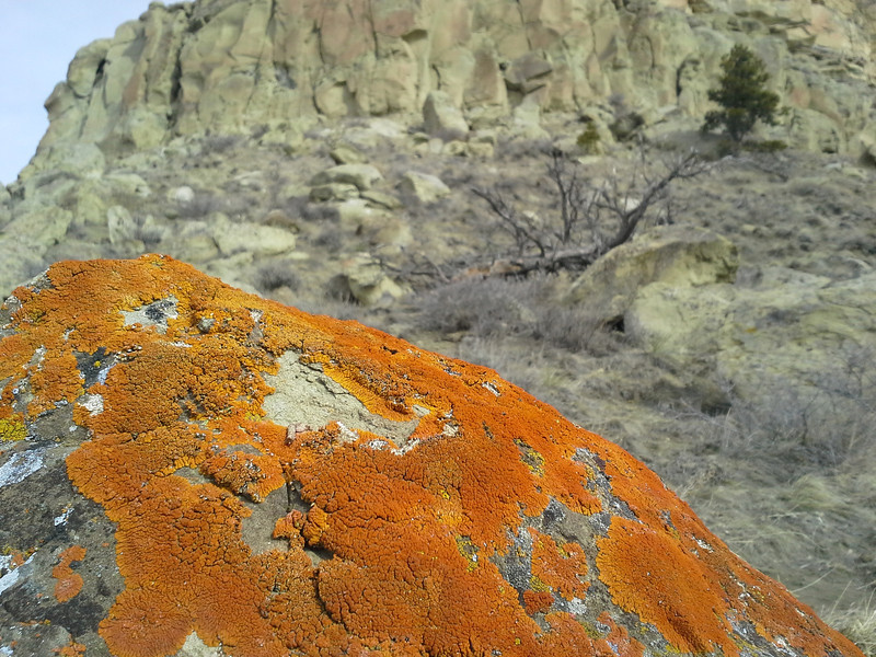 The orange fungus on this rock called out to me. I think it's <i>Xanthoria elegans</i>, an amazingly resilient lichen that has survived experiments in the harsh vacuum of outer space (if I've identified this correctly). see http://en.wikipedia.org/wiki/Xanthoria_elegans