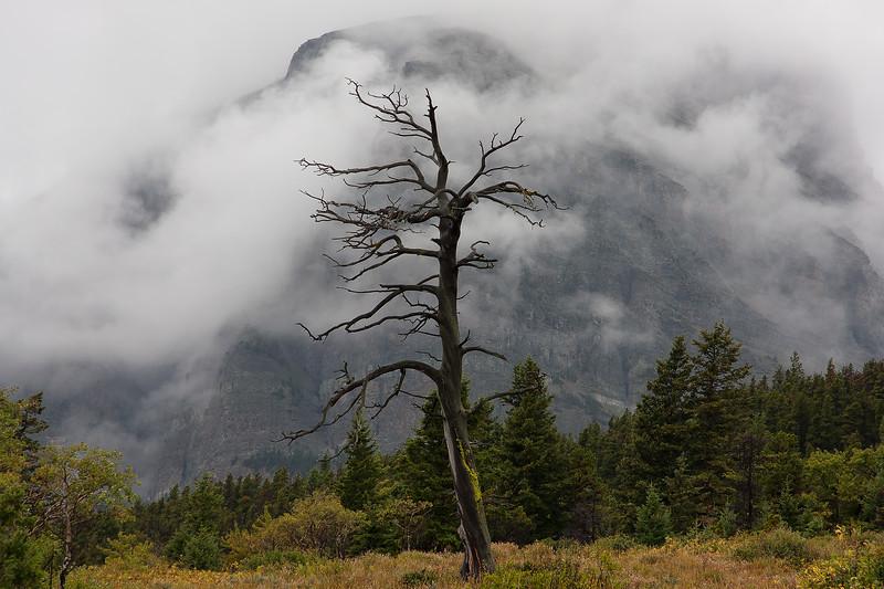 Many Glacier fog