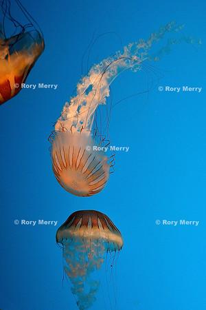 Fascinating Jellies