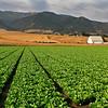 Salinas Valley Ag Land