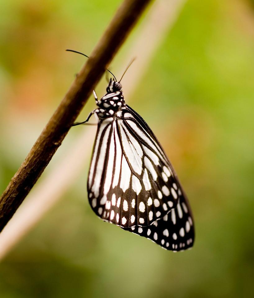 MTL_Butterfly147.jpg