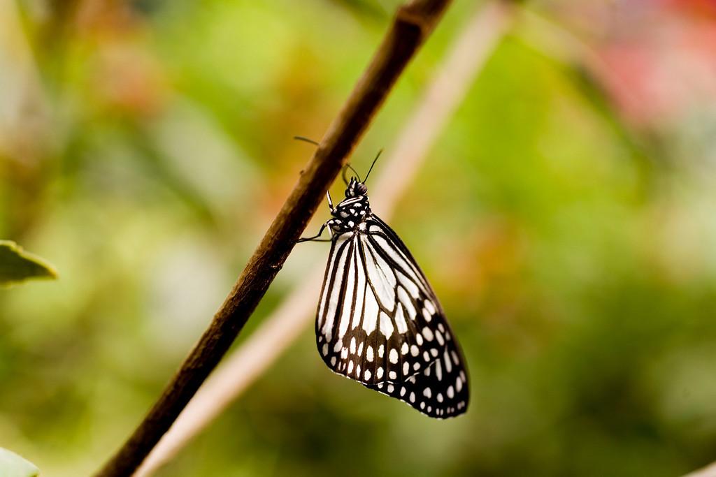 MTL_Butterfly149.jpg