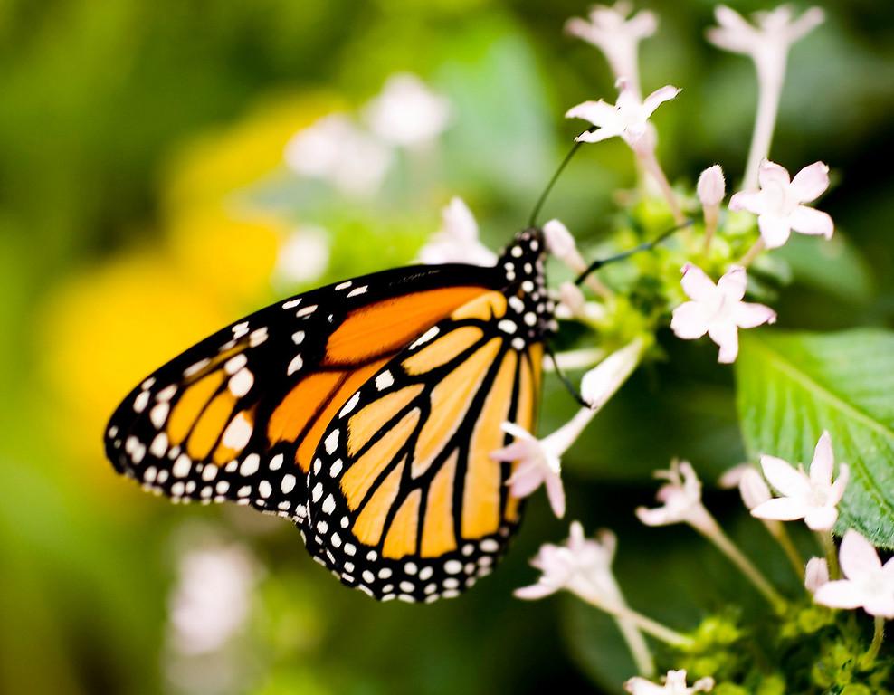 MTL_Butterfly110.jpg