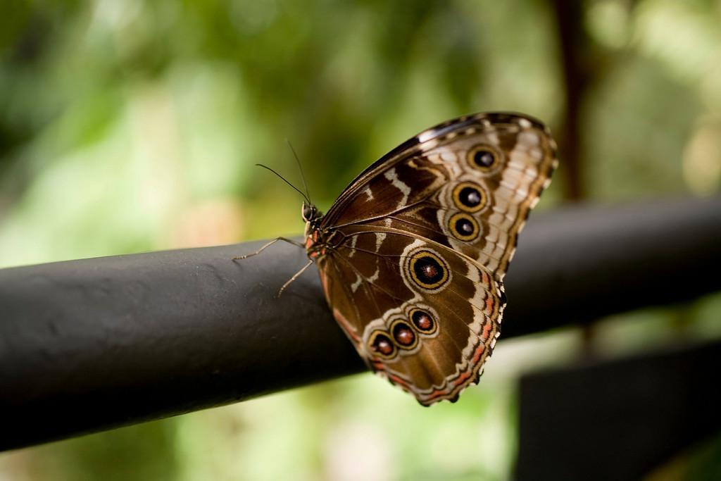 MTL_Butterfly091.jpg