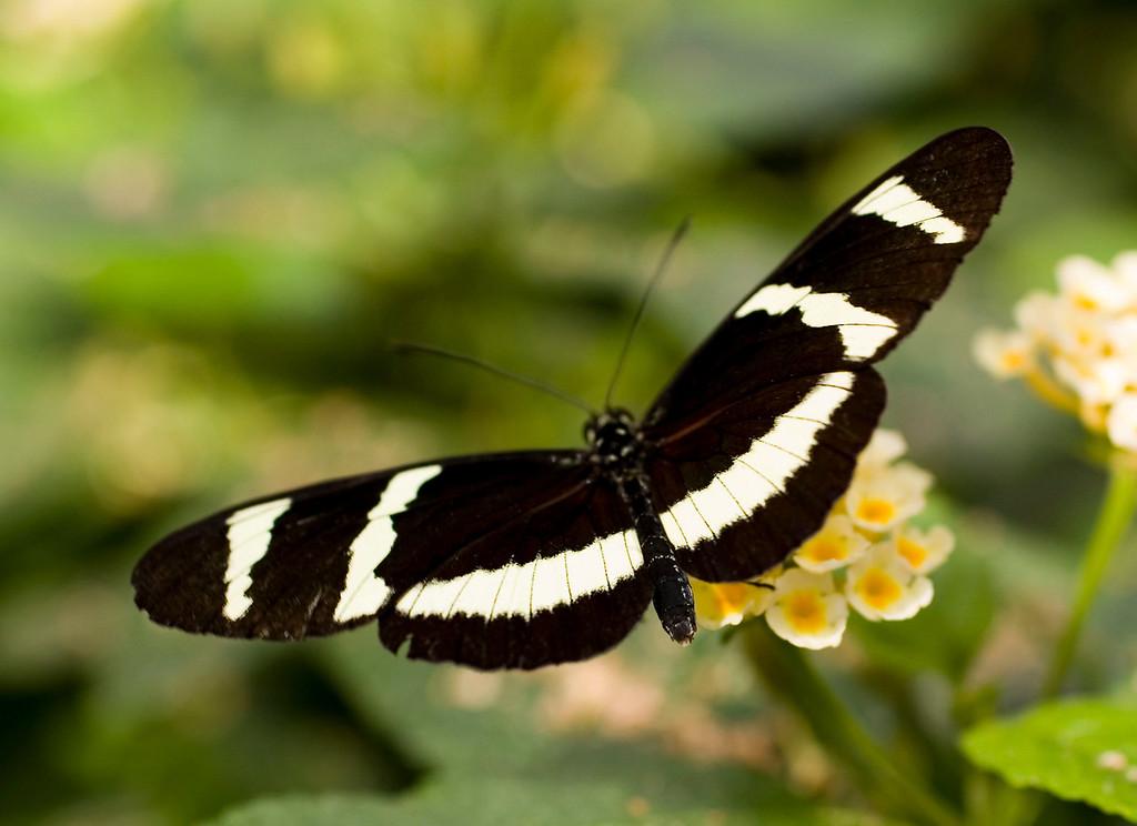 MTL_Butterfly072.jpg