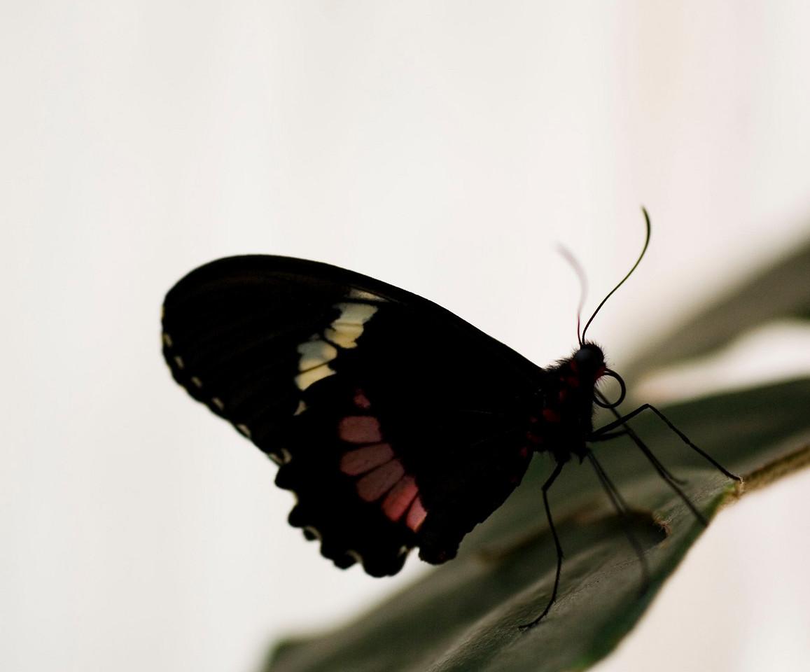MTL_Butterfly108.jpg
