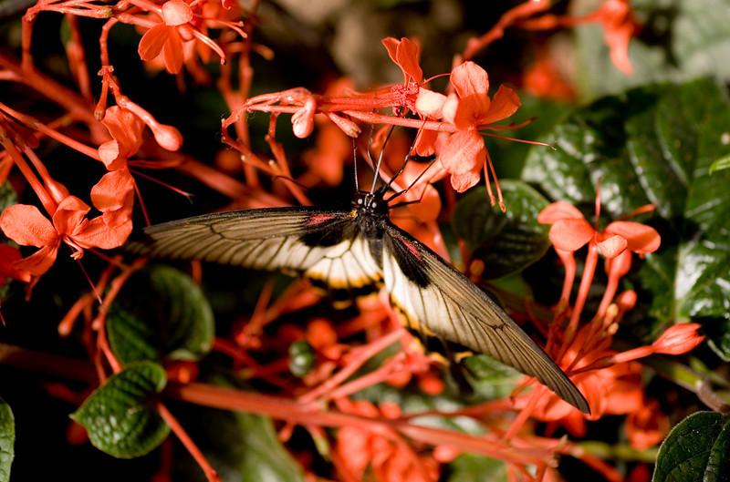MTL_Butterfly102.jpg