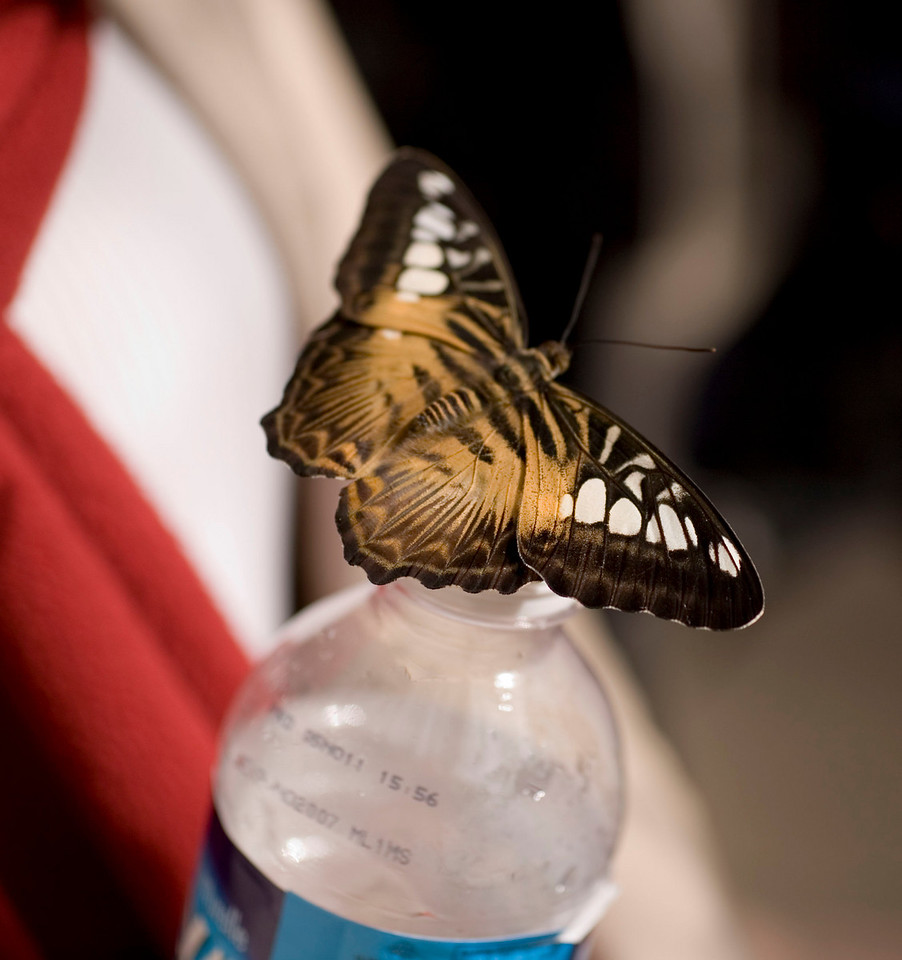 Butterflies get thirsty too...