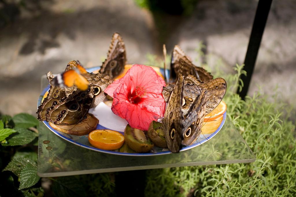 MTL_Butterfly083.jpg