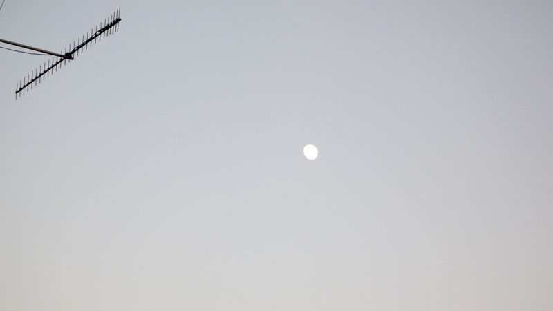 This is a JPEG made from the RAW shot. No PP except std setting in Adobe Raw converter.<br /> <br /> At Max 4x zoom only.