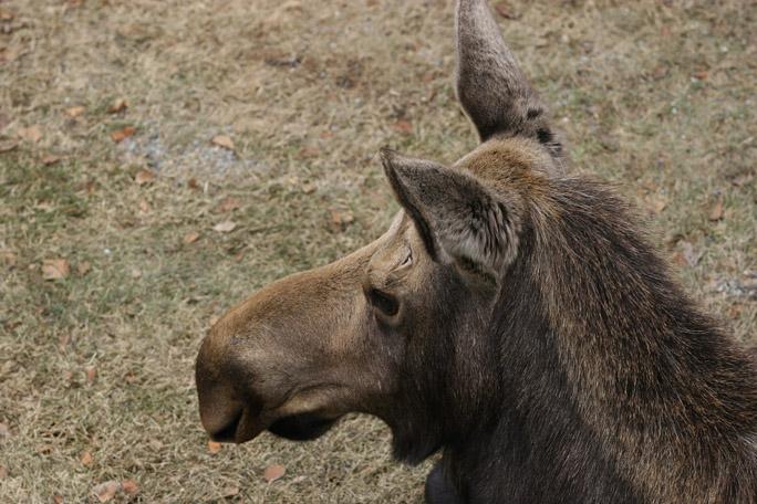 moose2327