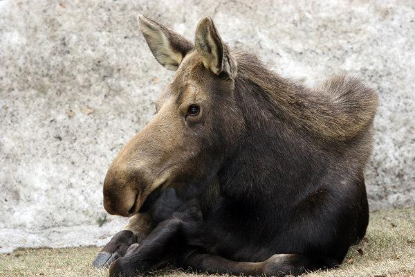 moose2349