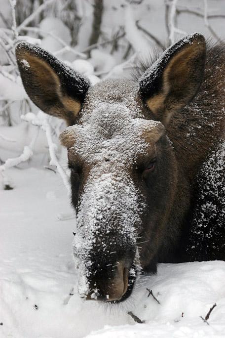 moose8672