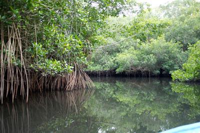 mangroves of San blas  Nayarit Mexico  2013 03 11 (2 of 3).CR2