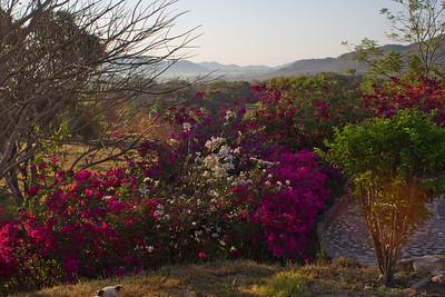 Rancho Primavera Jalisco Mexico 2013 03 16 (1 of 1).CR2