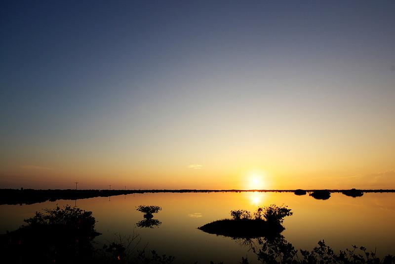 Merritt Island Mangroves