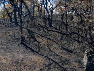 Morgan Fire burn area. IV