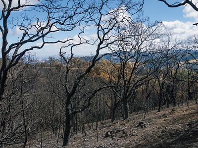 Morgan Fire burn area. II