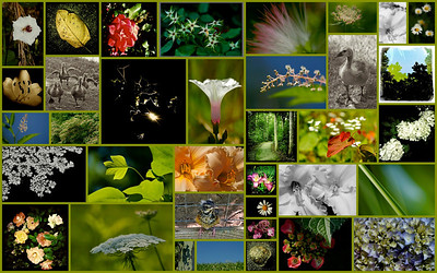 June 2012  Daily Nature Mosaic  A collection of some of my favorite nature photos, all taken in June 2012.  Thank you Smugmuggers for your kind comments on my photos through this month:)