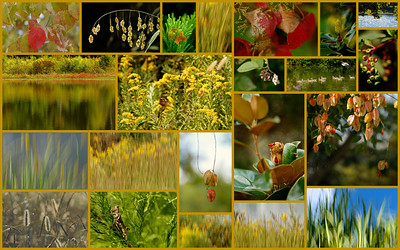 September 2012 Nature Collage