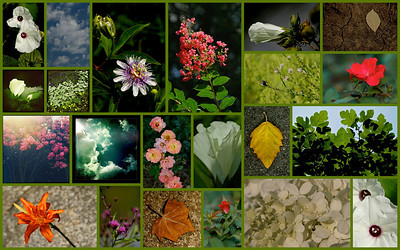 July 2012  Daily Nature Mosaic