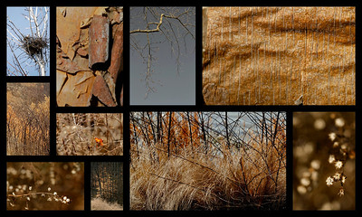 Winter Tones  January 31, 2012  An afternoon walk on a warm winter day.