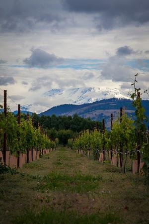 Mount Hood Winery, Hood River, Oregon
